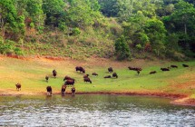 See wild animals while do boating at Thekkady