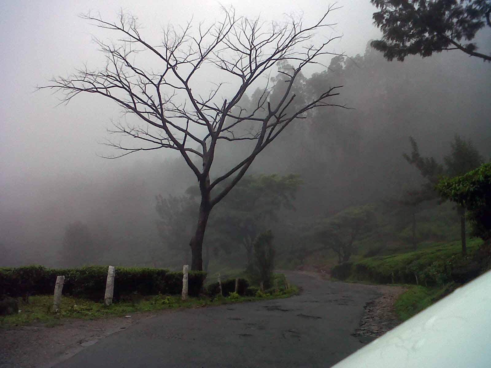 Munnar Kerala Tour Packages Kerala Honeymoon Packages